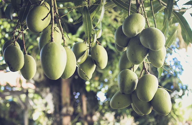 Massage dos - A l'ombre du manguier - Kinsa Hair Spa